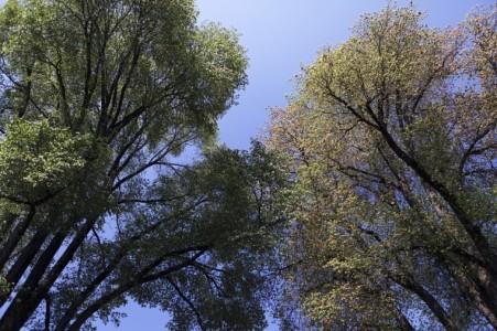 Under the Elm trees