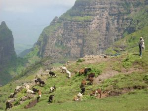 Goat herder tending his goats on the Ethiopian Highlands