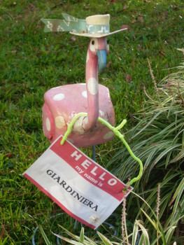 Our flamingo has a name: Giardiniera