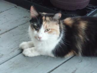 Mama Cat, no longer skittish or scruffy