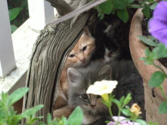 Surprise! Kitty Family