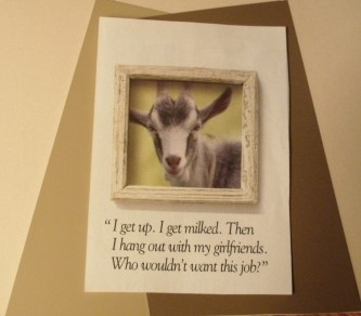 """Goat Quote """"I get up. I get milked. Then I hang out with my girlfriends. Who wouldn't want this job?"""""""