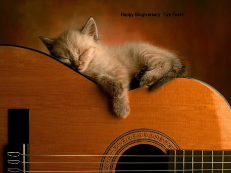 kitty on guitar