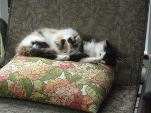 Curious & Fraidy Cat