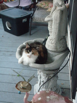 Mama Cass is our Porch Cat