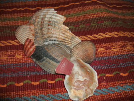 Woven colors and seashell orange color palatte